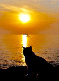 Kitty Looking at Sunset